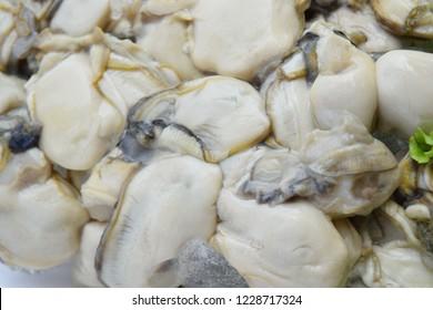 Oyster shell bare Full screen