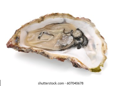 Oyster with shell isolated