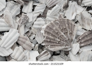 Oyster shells at beach, Normandy, France