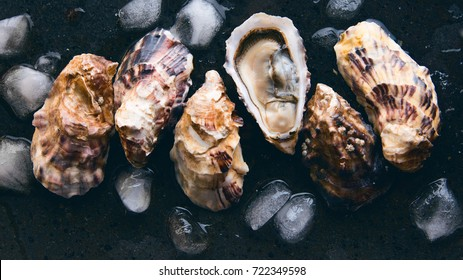 Oyster shells on dark background with ice