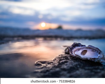Oyster shells washed by the sea during sunset