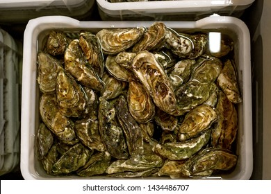 Oyster shuck and oysters in boxes with water, processing of oysters on farm. Concept of delicacies, seafood.