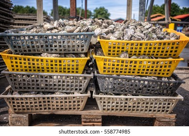 Oysters baskets in the port of La Teste, Bassin d'Arcachon, France