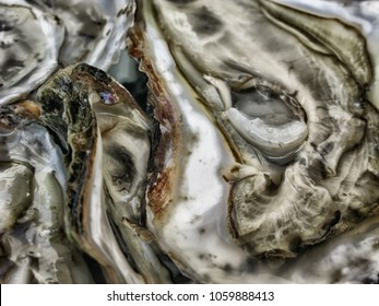 Oysters in close up