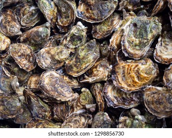 Oysters at the farmers market in Arles, France