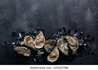 Oysters and ice on on black chalkboard. Shellfish contains a mass of beneficial micronutrients and vitamins that beneficially affect the entire body. Top view