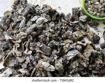 oysters in the market