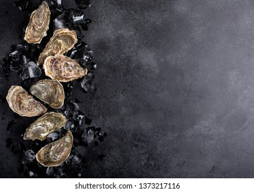 Oysters on black background with copy space. Shellfish contains a mass of beneficial micronutrients and vitamins that beneficially affect the entire body