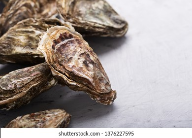 Oysters on concrete background. Shellfish contains a mass of beneficial micronutrients and vitamins that beneficially affect the entire body