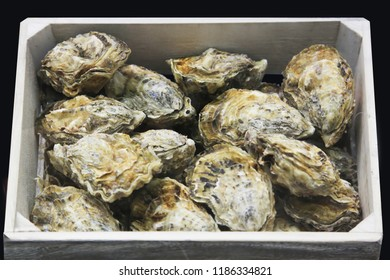 Oysters on the counter in wooden boxes on the market. Oysters for sale at the seafood market.