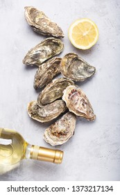 Oysters on gray concrete background. Shellfish contains a mass of beneficial micronutrients and vitamins that beneficially affect the entire body. Flat lay image