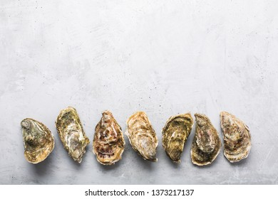 Oysters on gray concrete background. Shellfish contains a mass of beneficial micronutrients and vitamins that beneficially affect the entire body