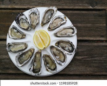 oysters on the half shell served flat lay on wooden background directly above view