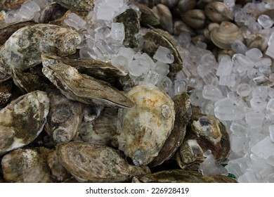 Oysters on Ice in Fish Market