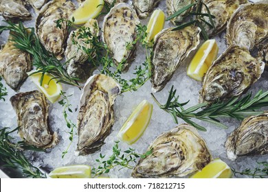 Oysters on the ice and lemon.Oyster Shells.