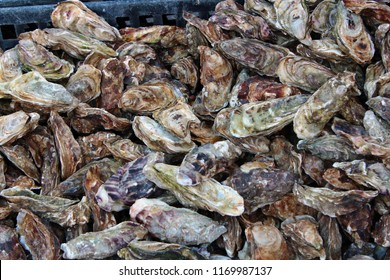 Oysters on the market of Cancale, Bretagne, France
