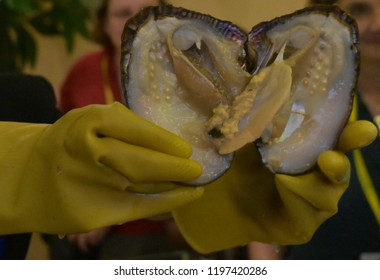 oysters perl colors