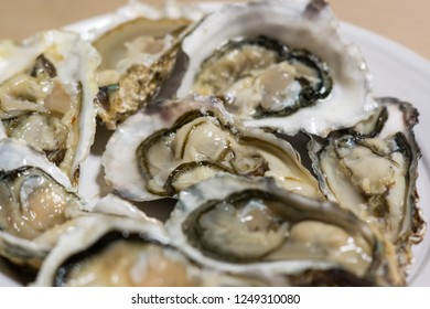 oysters in a plate close-up