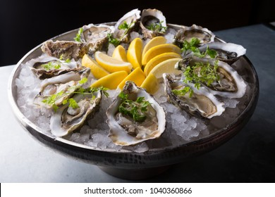 Oysters platter with lemon and ice served on a bar counter