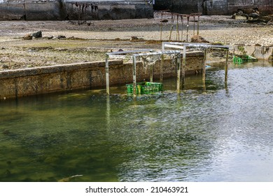 oysters in their park in southern Brittany