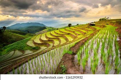 Pa Pong Piang Rice Terraces in the evening