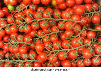 Pachino tomatoes in Sicily in the Portopalo di Capo Passero area near Pachino