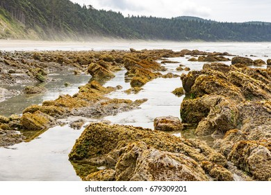 Pacific Coast, Washington, USA: Low tide at Shi-Shi Beach