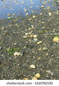 The Pacific Ocean Tidal Zone