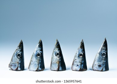 Pacific saury head close-up