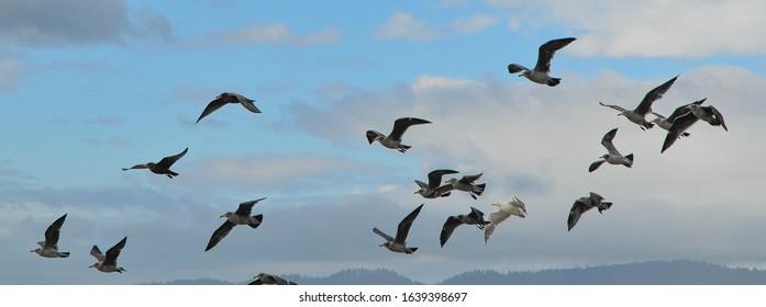Pacific Shore birds in Oregon State, USA
