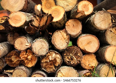 A pack of felled trees
