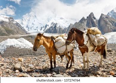 Pack Horses in the Karakorum Mountains, Pakistan