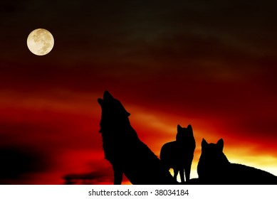 pack of three wolves at sunset with full moon