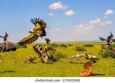 A pack of vultures devouring a carcass in Africa