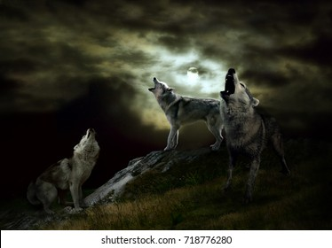a pack of wolves on a dark night