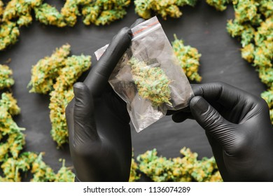 Package cannabis in hand .A lot of marijuana Package with weed and fresh buds of cannabis many weed. Copy spase Copy-space joint fresh green buds of cannabis