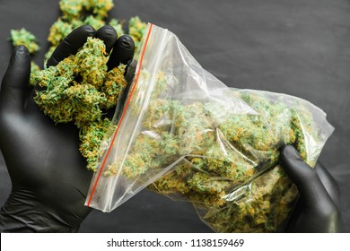 Package cannabis in hand .A lot of marijuana Package with weed and fresh buds of cannabis many weed.