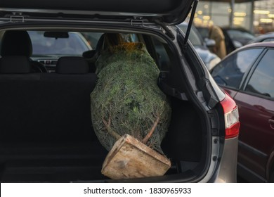 Packaged Christmas tree in a trunk of the car