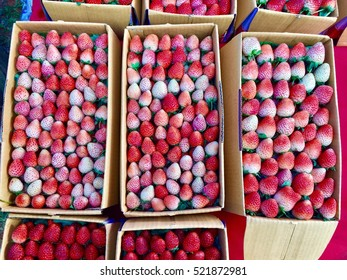 Packages of fresh strawberries for sale at Doi Inthanon Thailand - 24/11/16