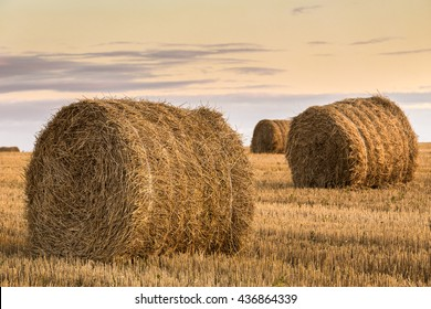 Packed hay bales after harvest on the field. Summer farm scenery with haystack at the sunset