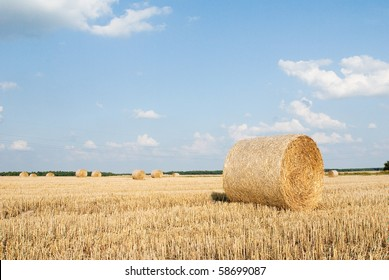 Packs of straw on the field