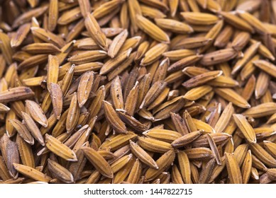 Paddy close up, pile of paddy rice seed. Soft focus on paddy. paddy rice Beads, seed