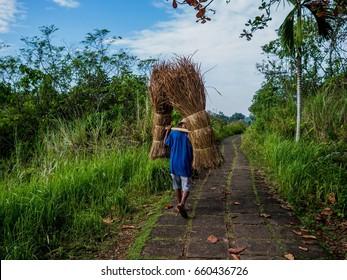Paddy Farmer Bali