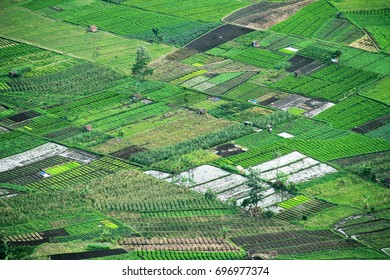Paddy Field Landscape