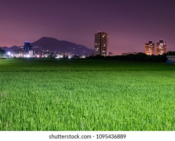 Paddy field in night