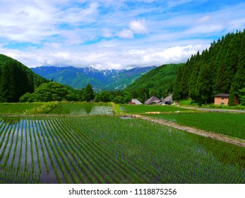 A paddy field and the northern Japanese alps.This place is Aooni Area.Hakuba Nagano Japan.Early June.