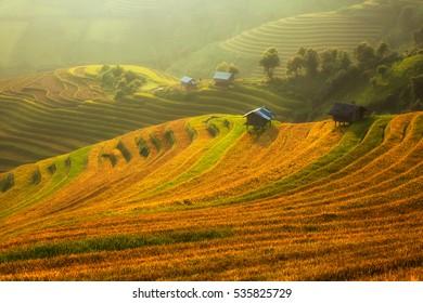 Paddy field plantation in morning sunrise.