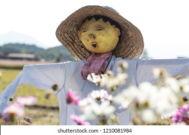Paddy field with scarecrow and cosmos flower