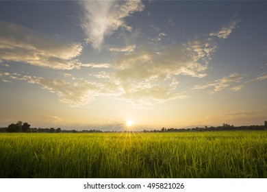 Paddy field with sunrise