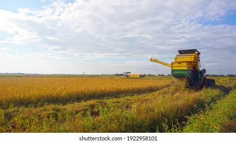 Paddy field in Tanjore - Tamilnadu